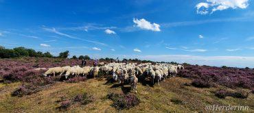 Dagje met de herder