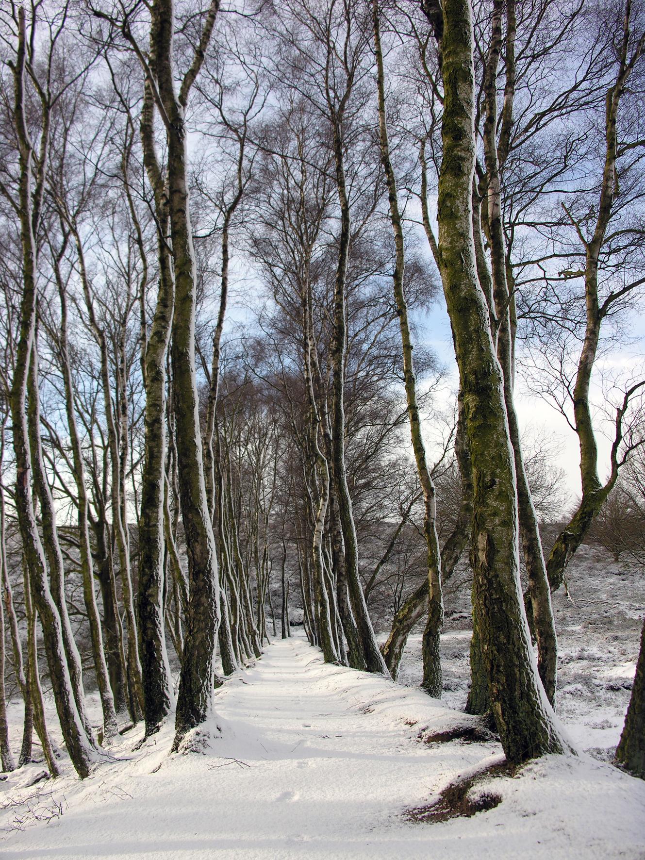 Winterwandeling tussen de bomen