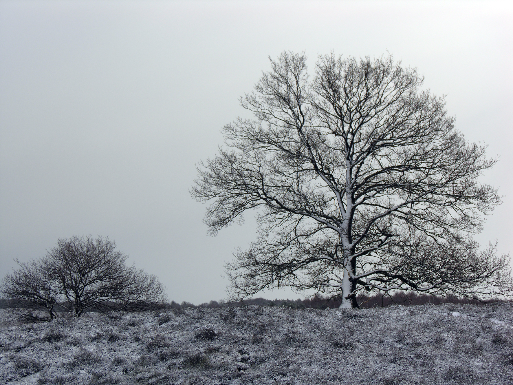Winterwandeling sneeuw