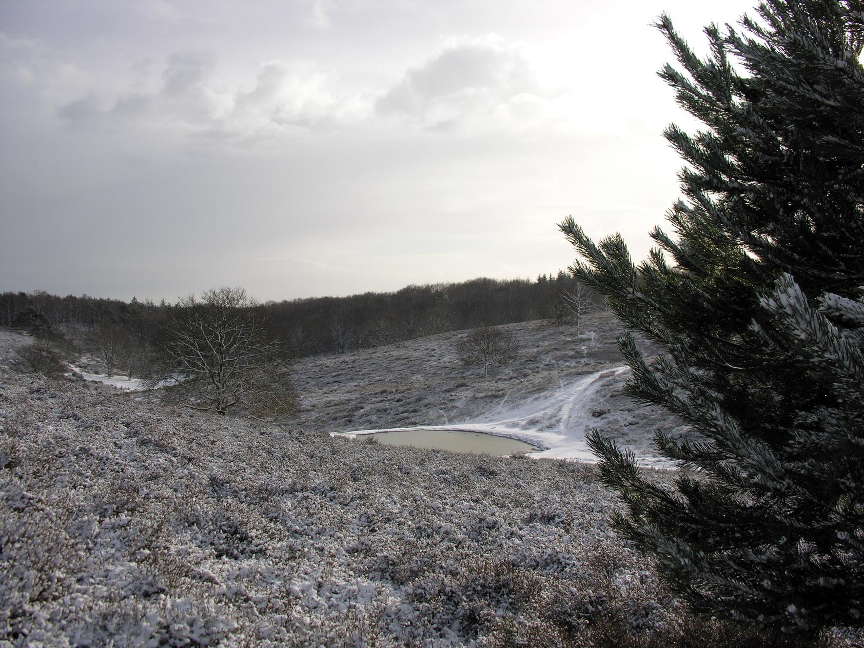 Winterwandeling Posbank