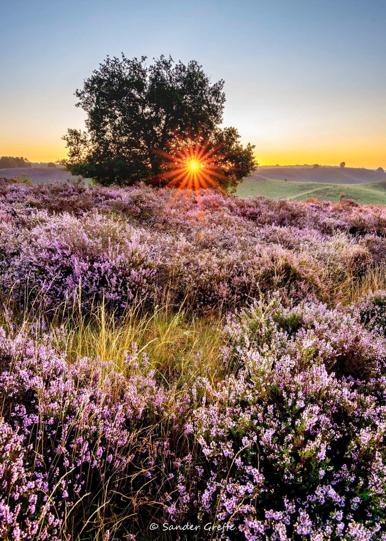 Heide met zon